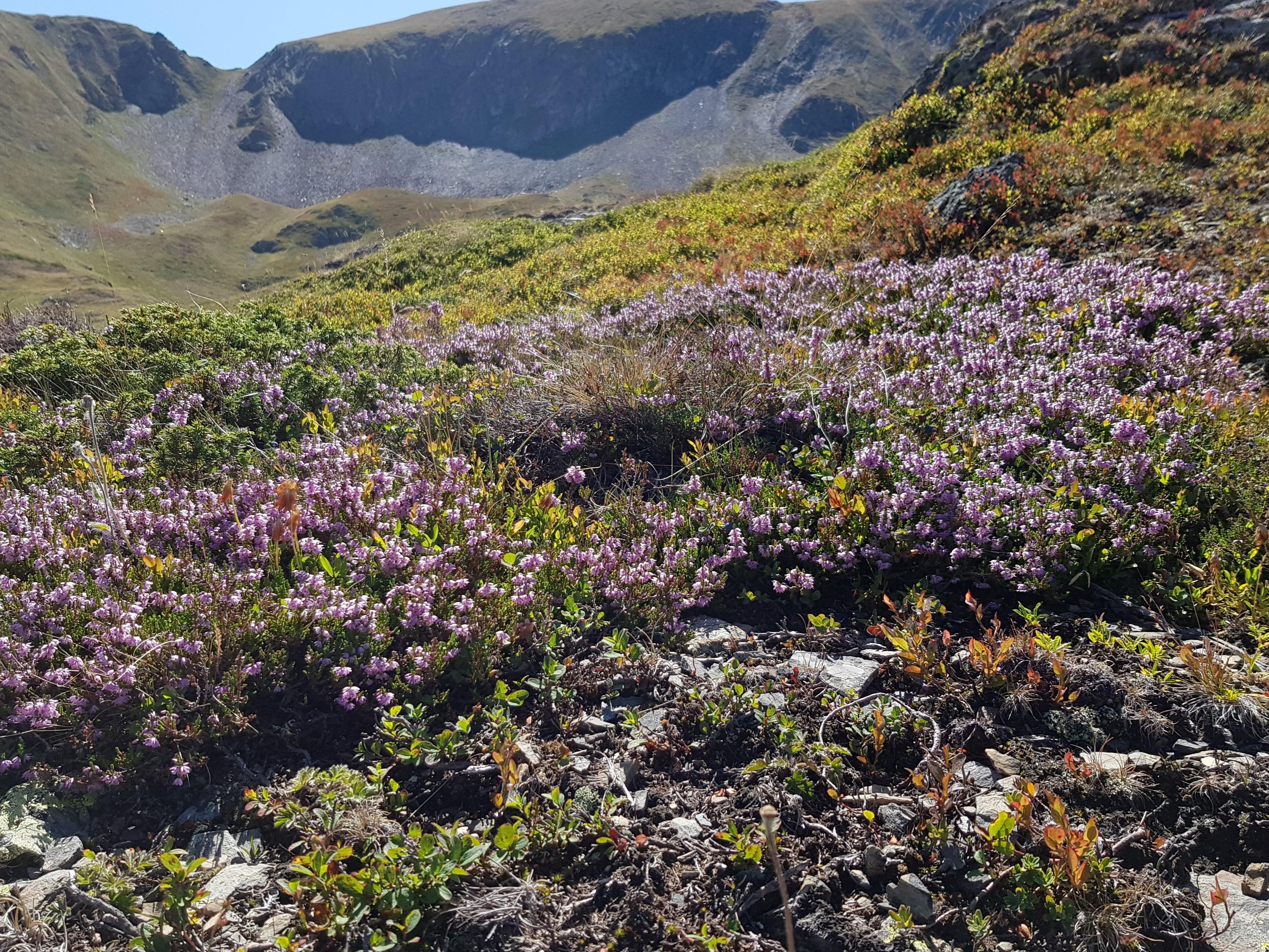 Excursión hacia Tuc dera Pincèla